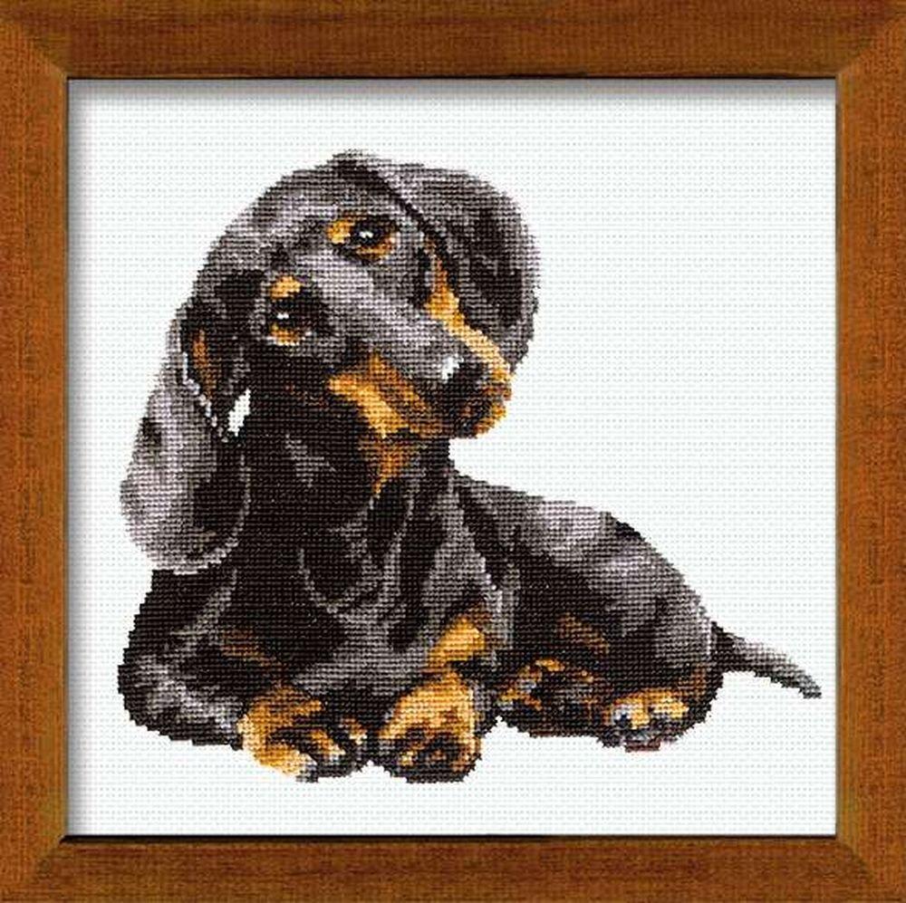Riolis - Juego de punto de cruz, diseño de perro salchicha: Amazon ...