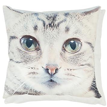 Amazon.com: Gato, Gatito Cara Beige y crema de terciopelo ...