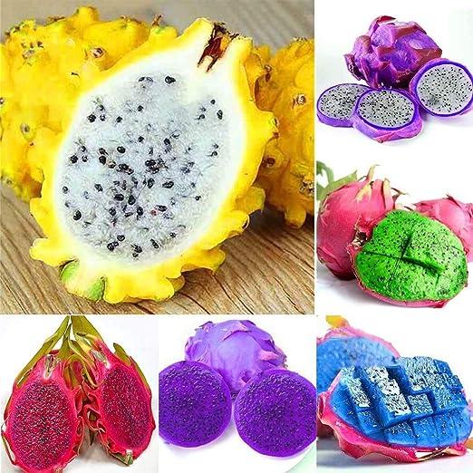 Resultado de imagen de diferentes tipos de pitaya