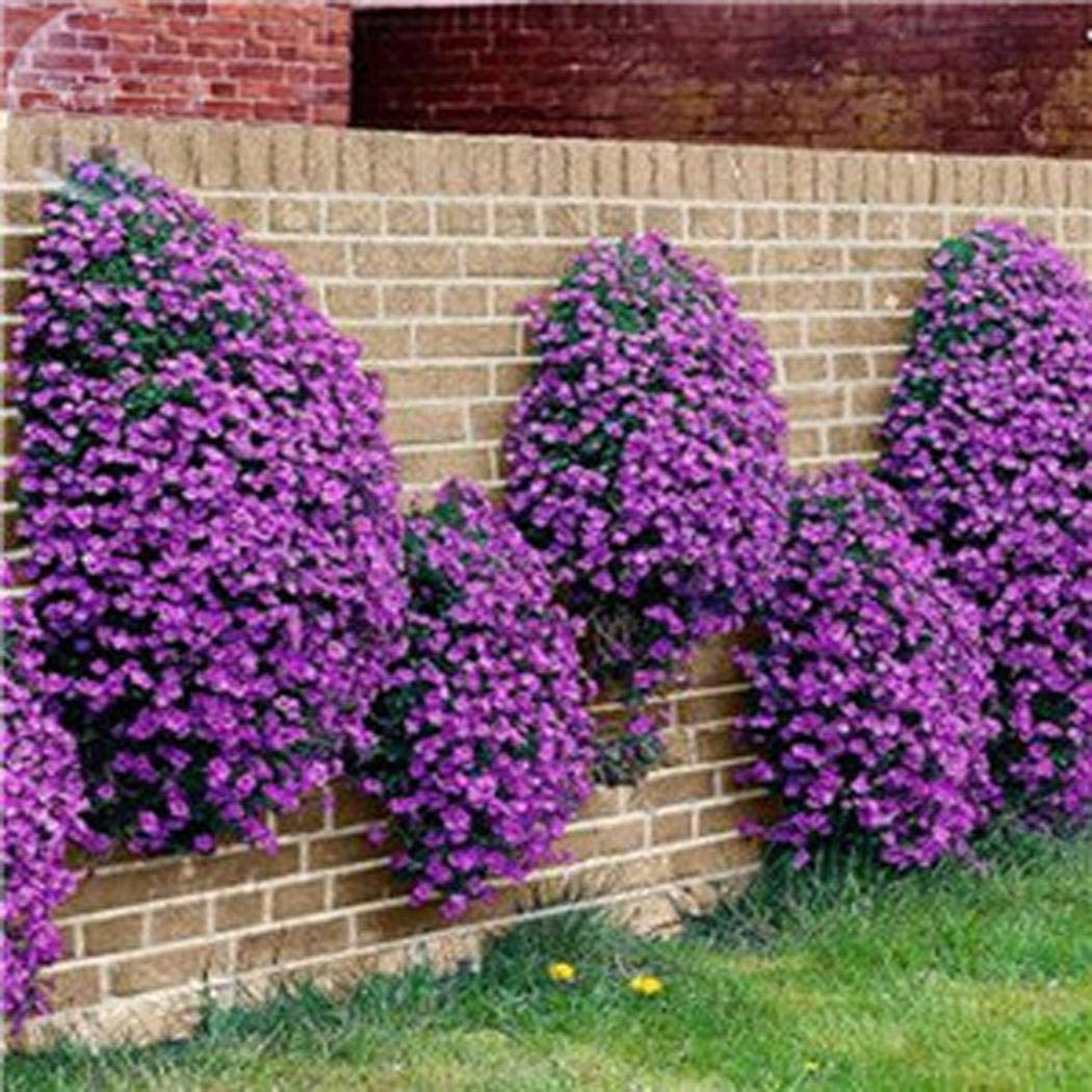 Scented Long-haired Mountain Thyme Seeds Sand Thyme Creeping Carpets Groundcover Perennial Flowers Stonecrop Seed Hardy Perennial Znadna Seed