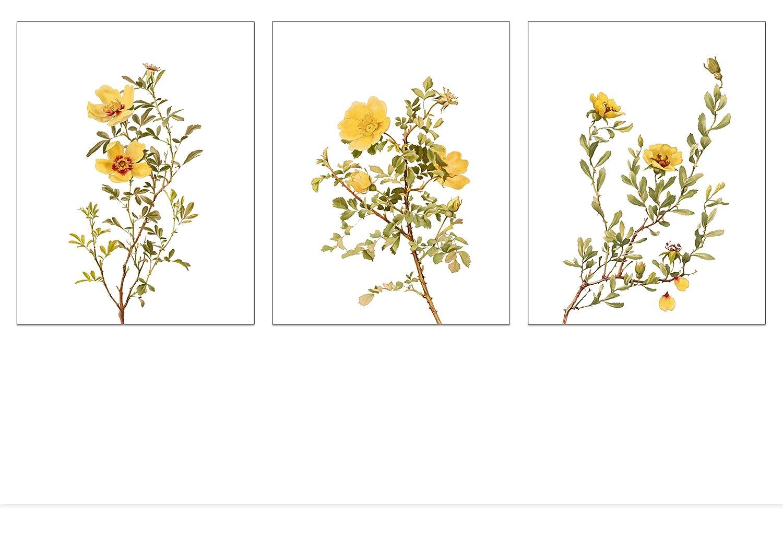 Vintage Flower Wall Art Decor - Nature Wall Art Print - Yellow Rose Botanical Prints - Floral Illustration - Plant Poster - Set of 3 Prints - 8x10 each - Unframed