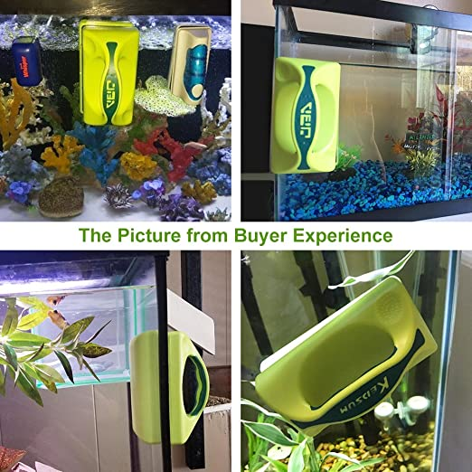 KEDSUM Limpiador para acuarios con un asa, color verde (grande): Amazon.es: Productos para mascotas