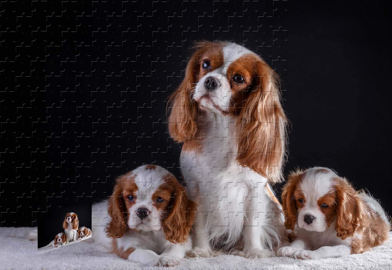 新版 PigBangbang、20.6 X PigBangbang、20.6 15.1インチ B07HY75PXP、Intellectiv Gamesプレミアムバスウッドジグソーグルー – – 3犬キュートペット– 500ピースジグソーパズル B07HY75PXP, ユザワマチ:012bfd0c --- sinefi.org.br