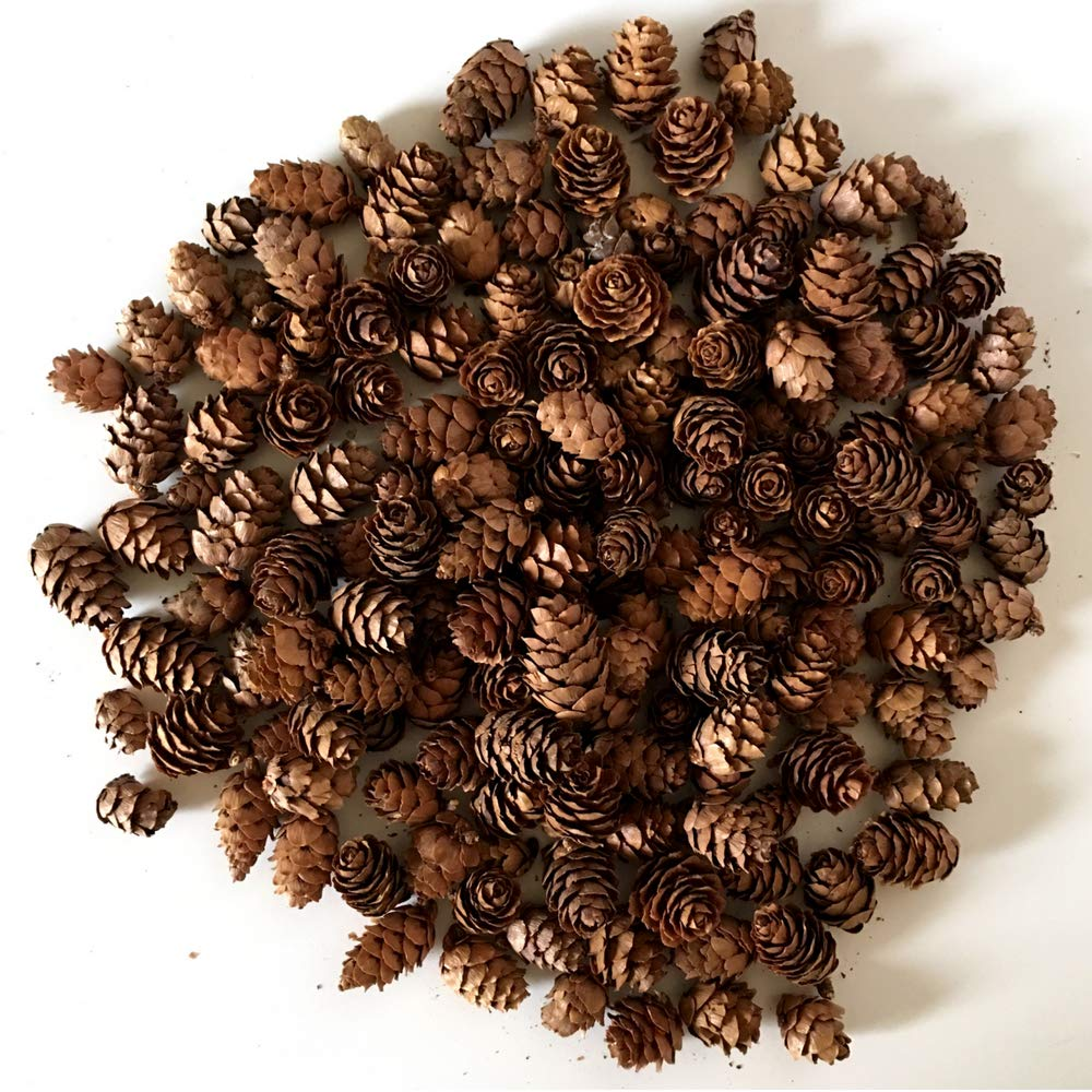 Banberry Designs Mini Brown Pinecones - Approx. 200 Small Assorted Sized Pine Cones - Fall and Christmas Crafts