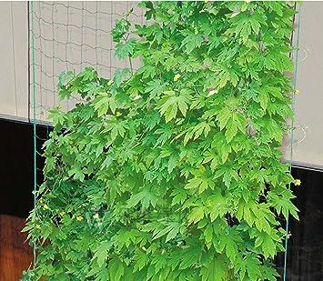 Kingt Ranknetz Mit Der Maschenweite 10x10 Cm Rankhilfe Gartennetz