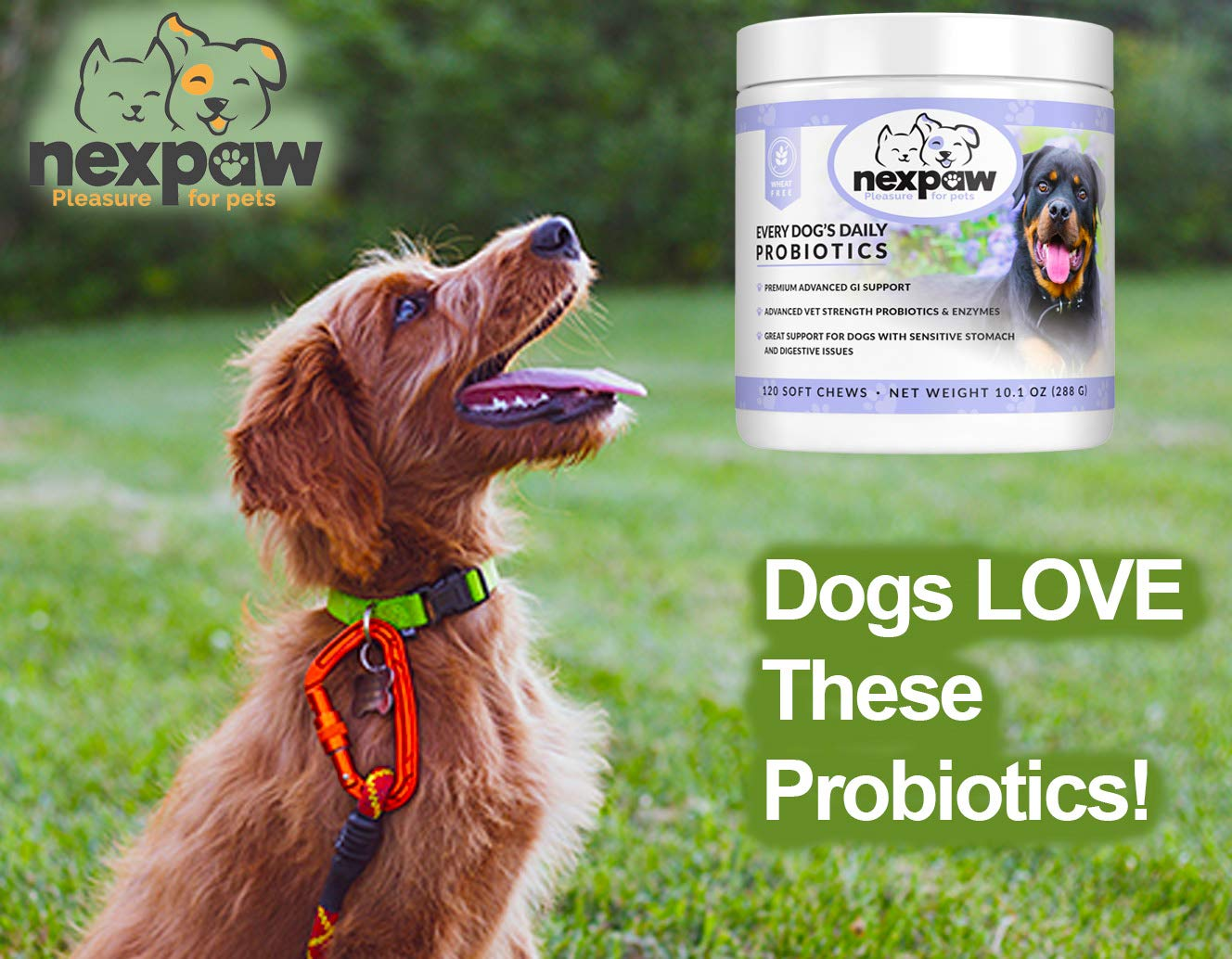 Amazon.com: NEXPAW Probiotics for Dogs Digestive Health ...