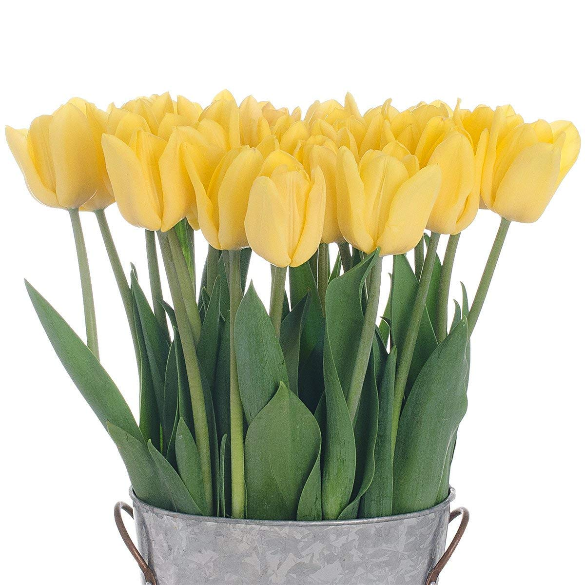 Stargazer Barn -2 Dozen Yellow Tulips with French Bucket Style Vase - Farm Fresh by Stargazer Barn