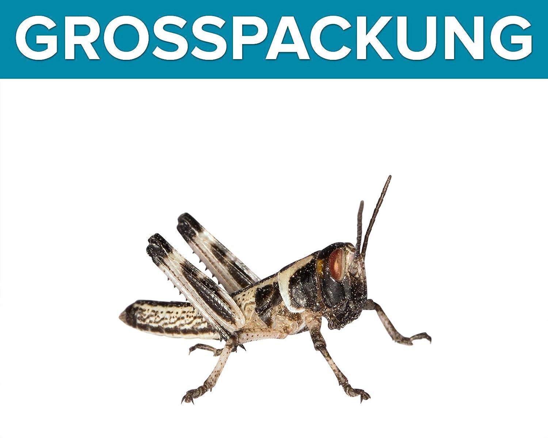 Heuschrecken 100 kleine Wüstenheuschrecken Futterinsekten Reptilienfutter Feeders & more