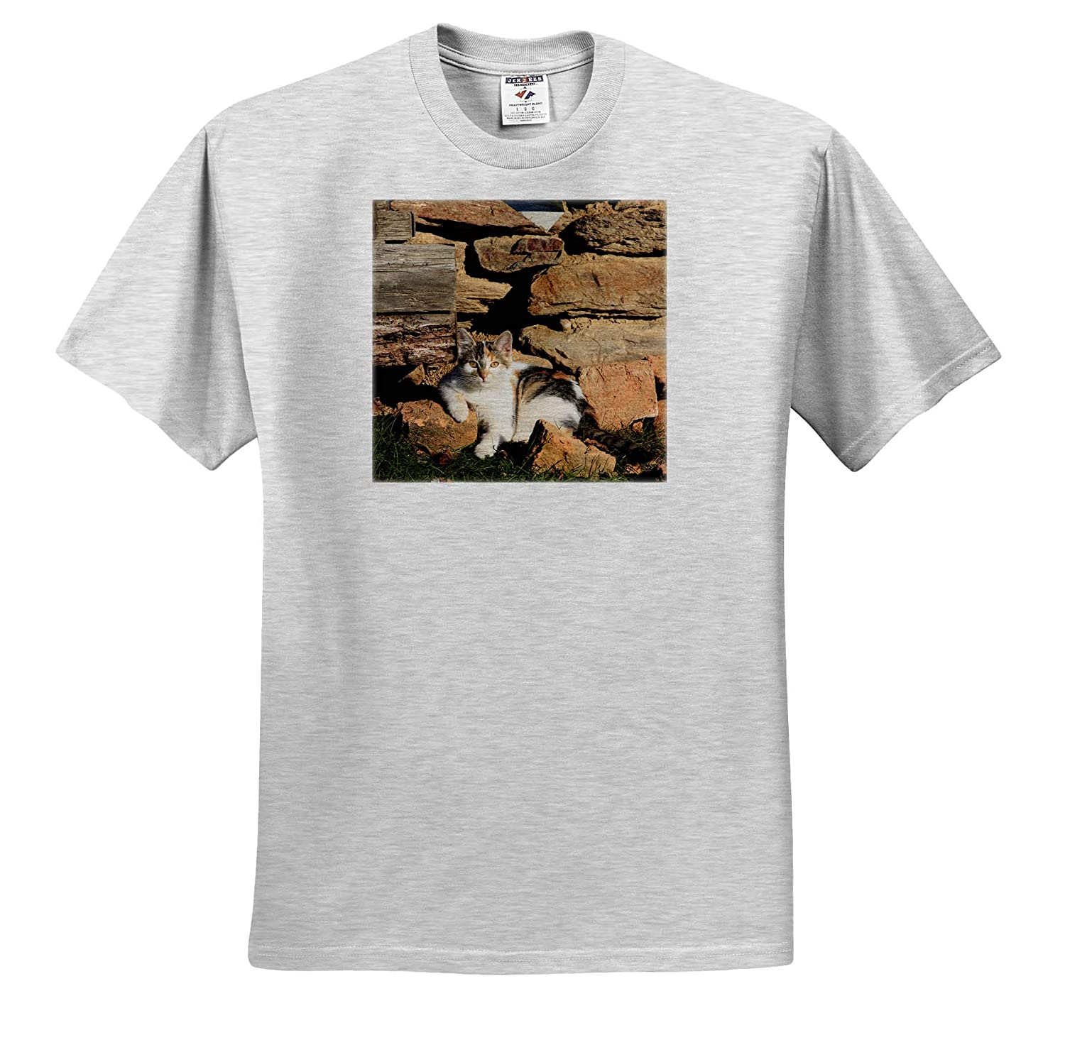 - Adult T-Shirt XL 3dRose Danita Delimont ts/_313848 Cat Leaning Against Stone Wall Cats