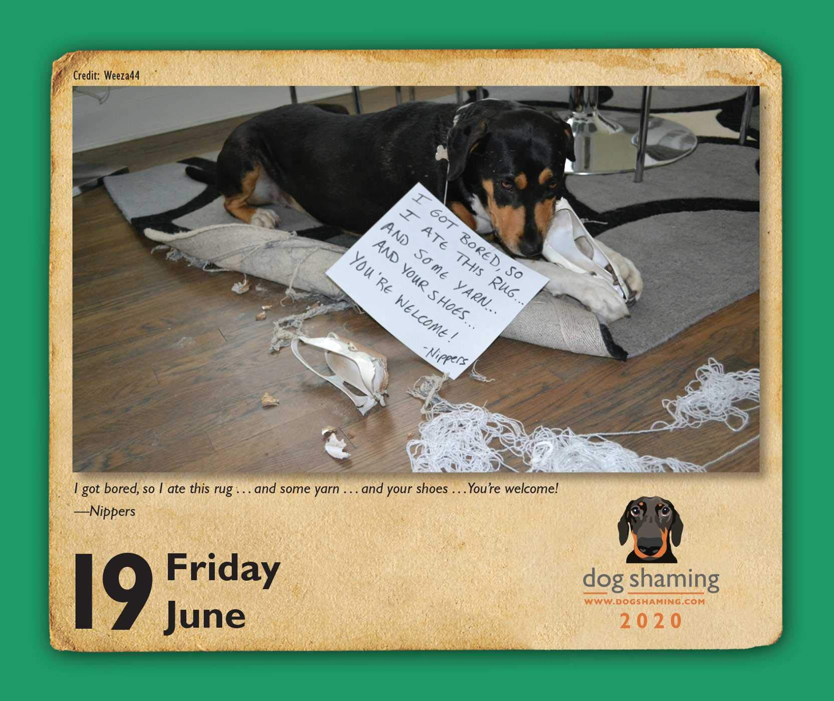 Dog Shaming Calendar 2020 Dog Shaming 2020 Day to Day Calendar: Pascale Lemire, dogshaming