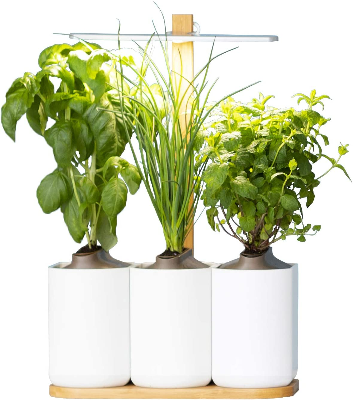 Prêt à Pousser Lilo, your Indoor Garden ❃ Grow your own fresh herbs at  home, easy and all year round ❃ Including Basil, Mint and Chives