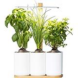 smart lilo le potager d 39 int rieur autonome pr t pousser bio cultivez toute l 39 ann e. Black Bedroom Furniture Sets. Home Design Ideas