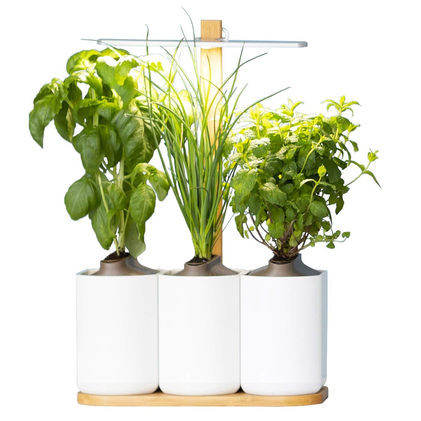 Lilo, Ihr smarter Indoor-Garten ❃ neue Version ❃ Bauen Sie ganz einfach Ihre eigenen frischen Kräuter an, das ganze Jahr über ❃ Inklusive Basilikum, Minze und Schnittlauch