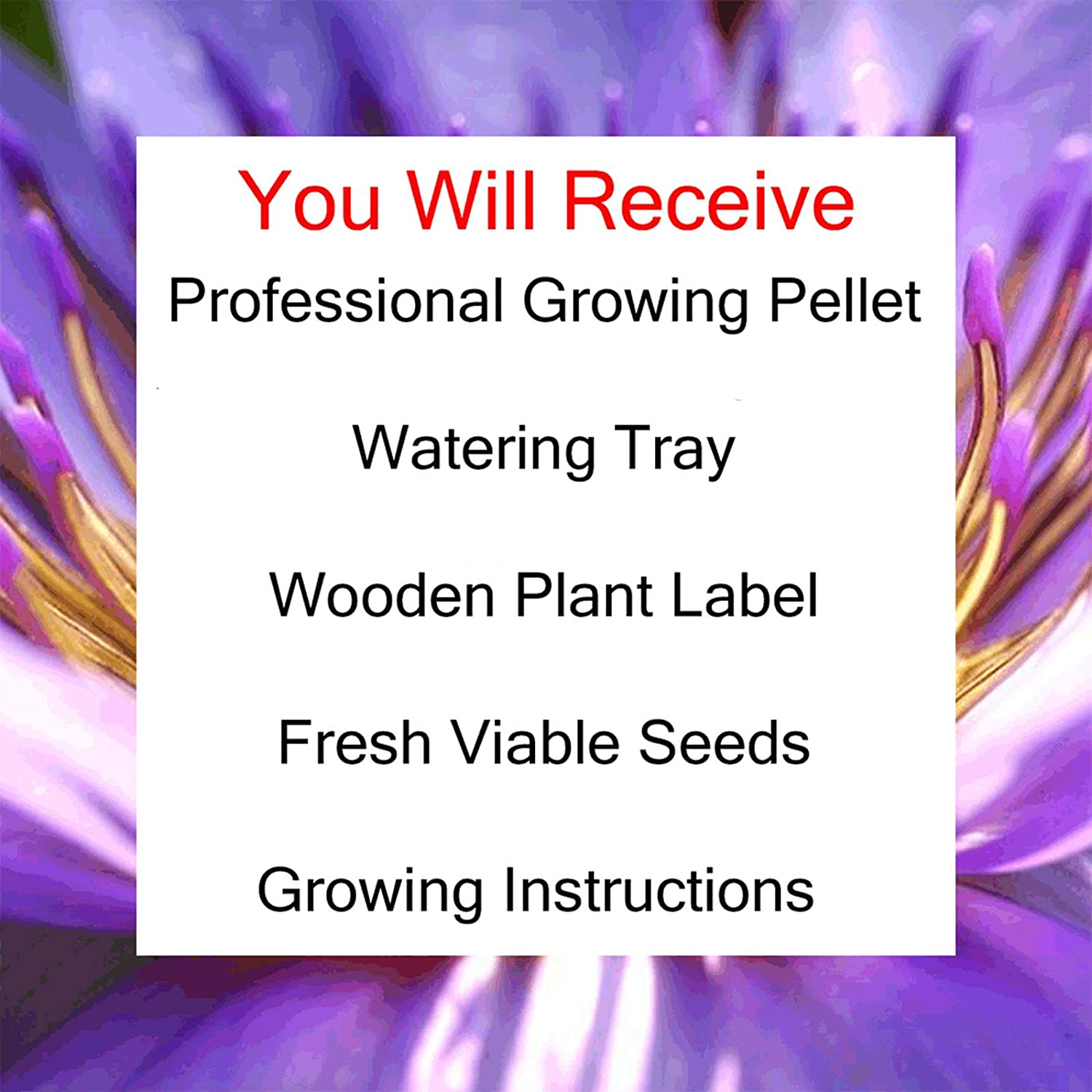 Unusual Women or Children Unique and Quirky Complete Beginner Friendly Indoor Gardening Gift for Men Grow Your Own Livingstone Daisy Plant Kit