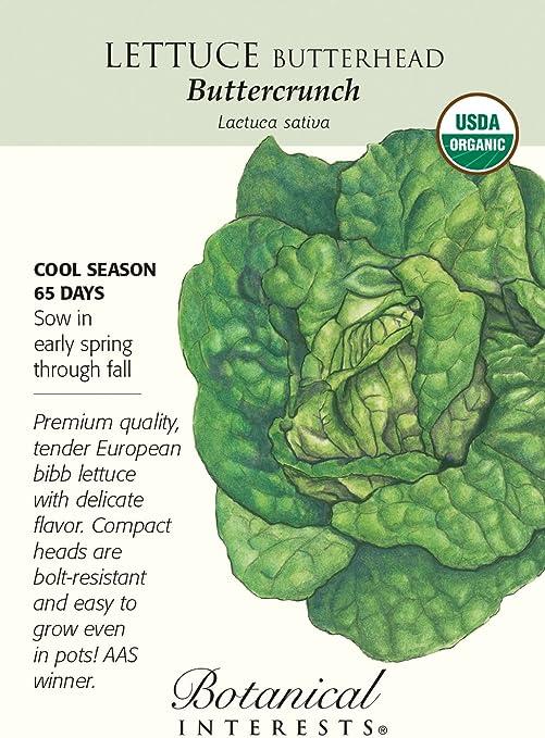 NON GMO BUTTERHEAD BUTTERCRUNCH HEIRLOOM ORGANIC LETTUCE SEED 50+ SEEDS,