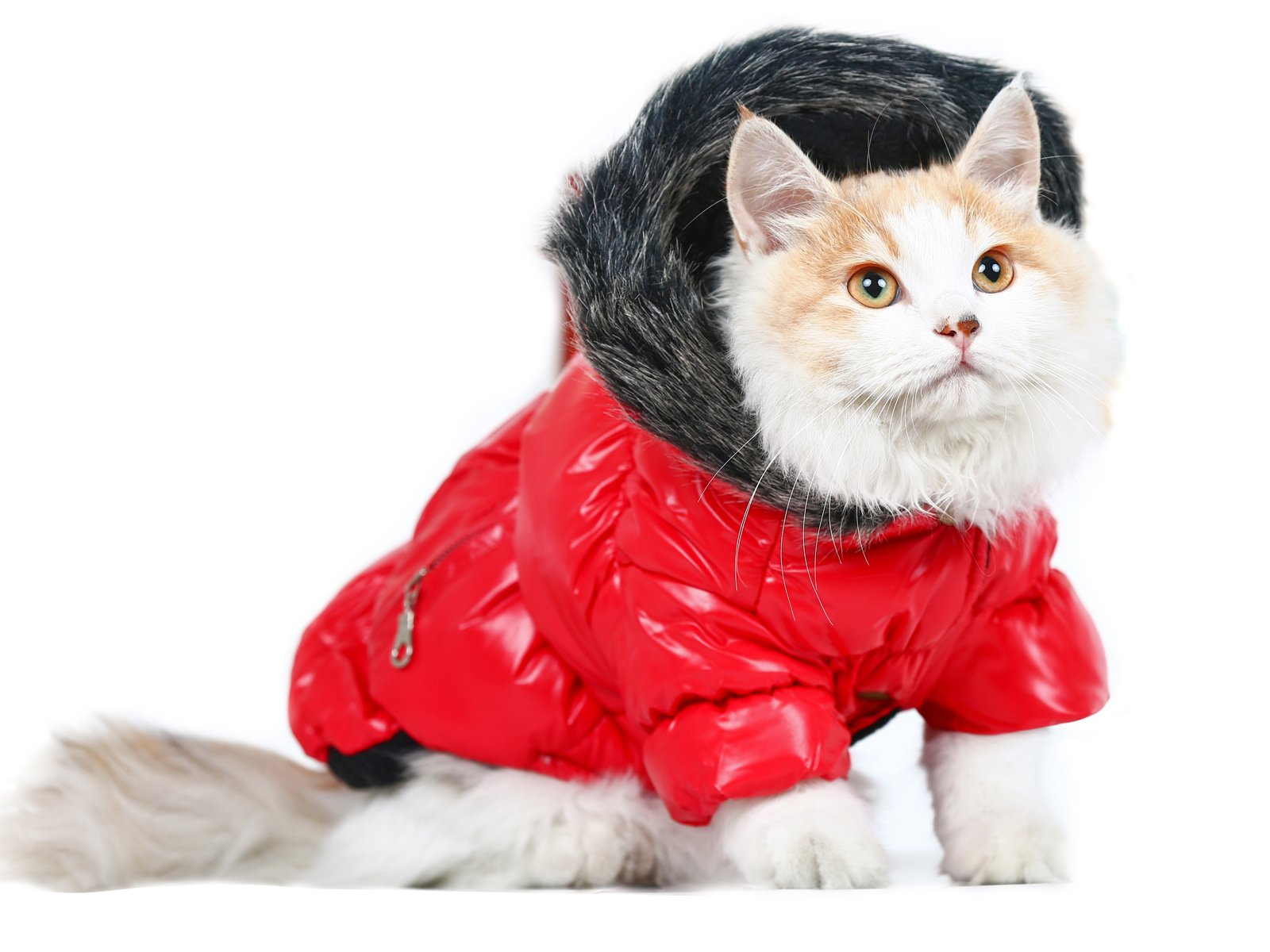 PLS Pet Halloween Skiing Jacket for Pets, Jacket for Dogs, Jacket for Cat, Winter Dog Coat, Red, Small, Dog Costume, Cat Costume, Protects from Cold Weather, Luxurious and, Halloween Sale