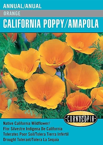 Amazoncom Orange California Poppyamapola Englishspanish