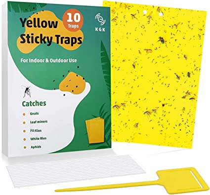 6x8 Inches Thrips Leaf Miners Whiteflies Other Flying Plant Insects Aphids Kensizer 10-Pack Dual-Sided Yellow Sticky Traps for Flying Plant Insect Like Fungus Gnats Twist Ties Included