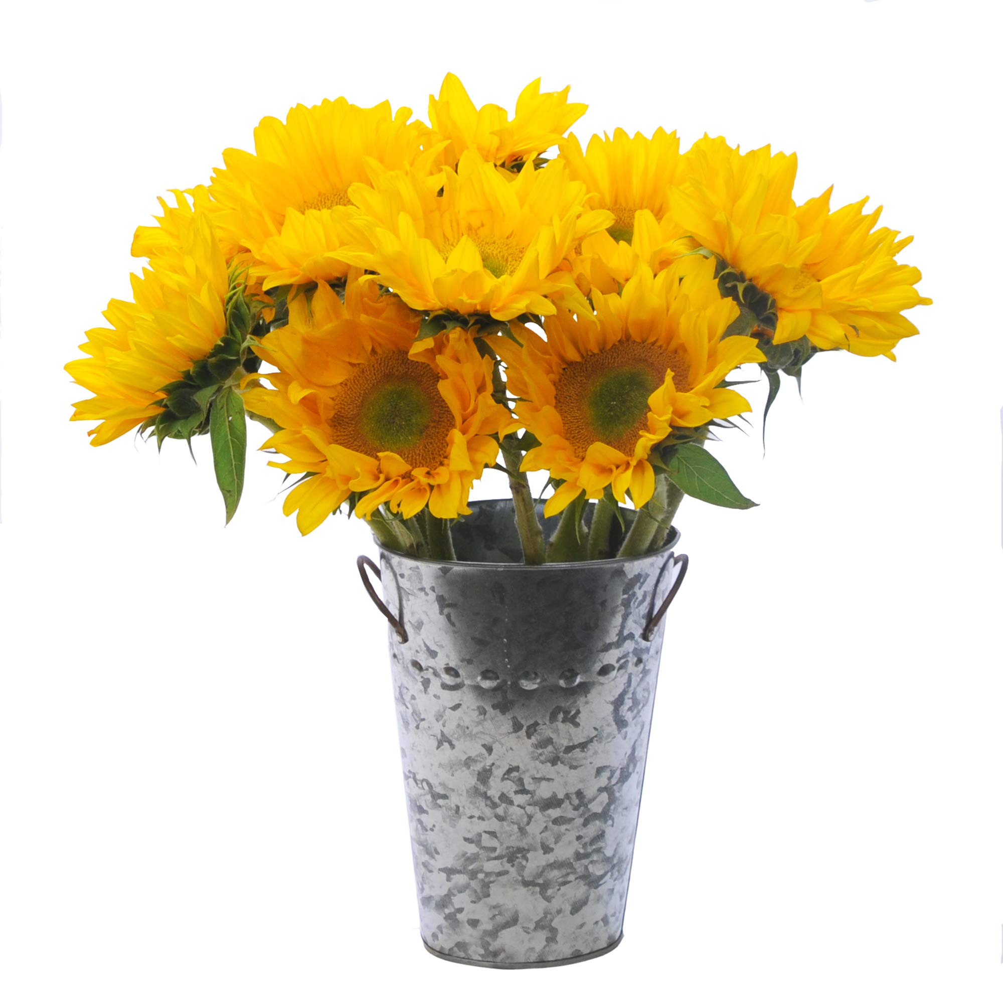 Stargazer Barn - Beautiful Bouquet Of Fresh Sunflowers With Vase by Stargazer Barn