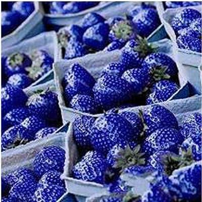 Makalar 100 pcs/Bag Blue Climbing Strawberry Seeds Perennial Bonsai Plant Seeds Fruits : Garden & Outdoor