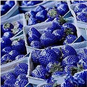 Makalar 100 pcs/Bag Blue Climbing Strawberry Seeds Perennial Bonsai Plant Seeds Fruits