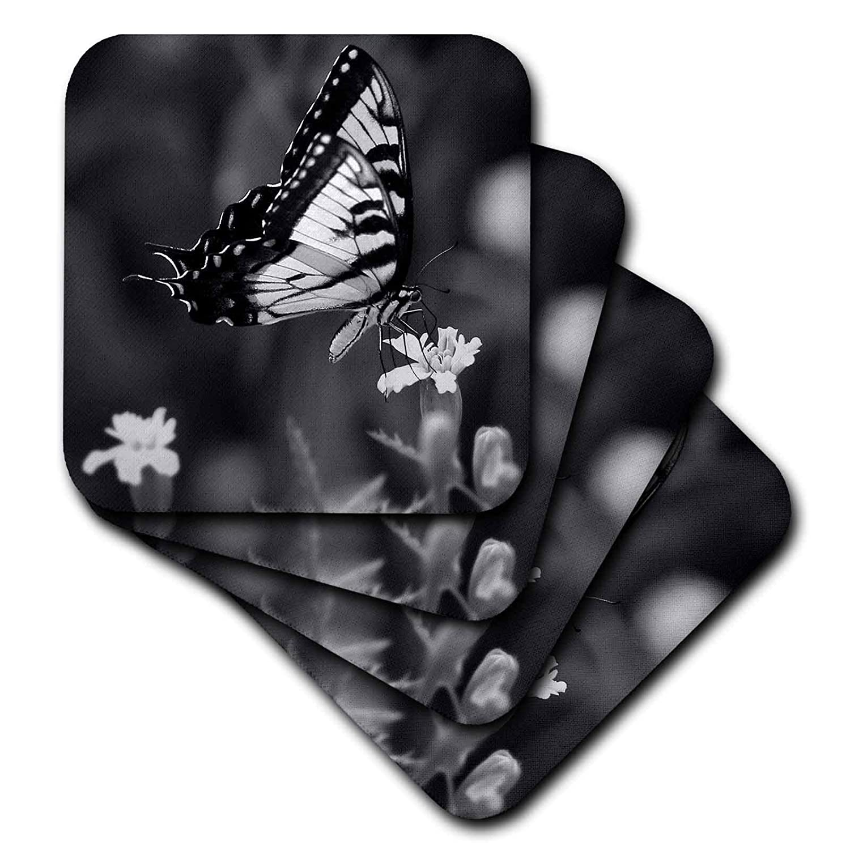 3dRose Stamp City – 昆虫 – ブラックとホワイトの写真 マリゴールドにスワローテールバタフライ - コースター set-of-8-Ceramic cst_290792_4 set-of-8-Ceramic  B07GT8C16R