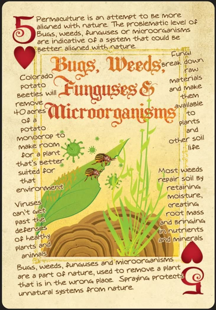 bugs soil permaculture playing card