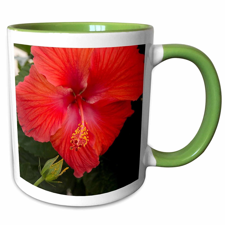 11 oz Ceramic Mug Close up of Hibiscus flower 3D Rose 229216/_1Mexico Bahia de Banderas White Bucerias