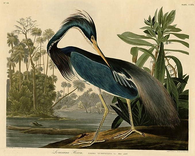 John James Audubon Carolina Parrot Giclee Canvas Print Paintings Poster Reproduc