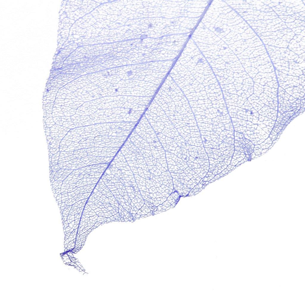 perfeclan 50pcs Skelettbl/ätter Schleierbl/ätter Gepresste Blumen getrocknete Blatt DIY Karten Machen Scrapbooking Handwerk Lesezeichen Wei/ß