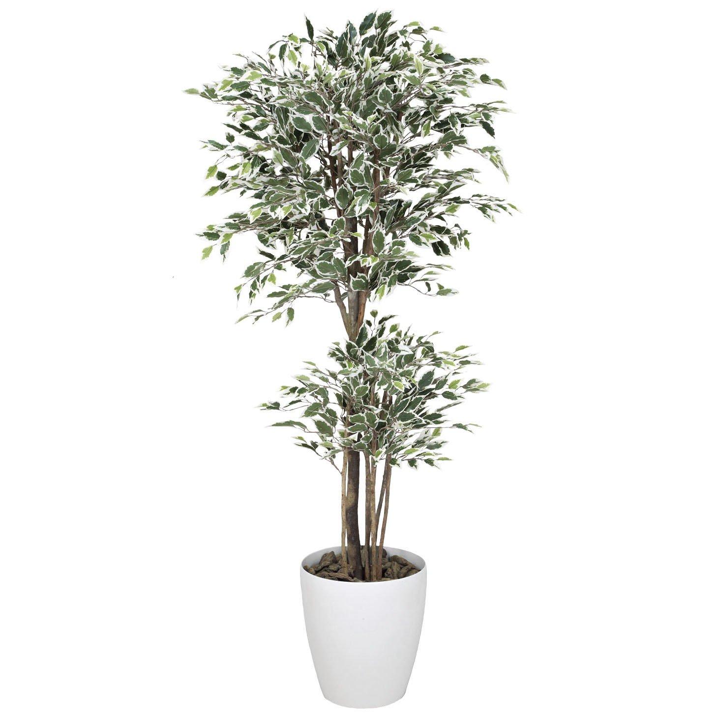 造花アート観葉植物 トロピカルベンジャミン斑入リ1.8【ビジネスフラワー】<開店開院祝い 誕生日プレゼント 長寿祝いなど各種お祝いにおすすめ> B01M31F4P6