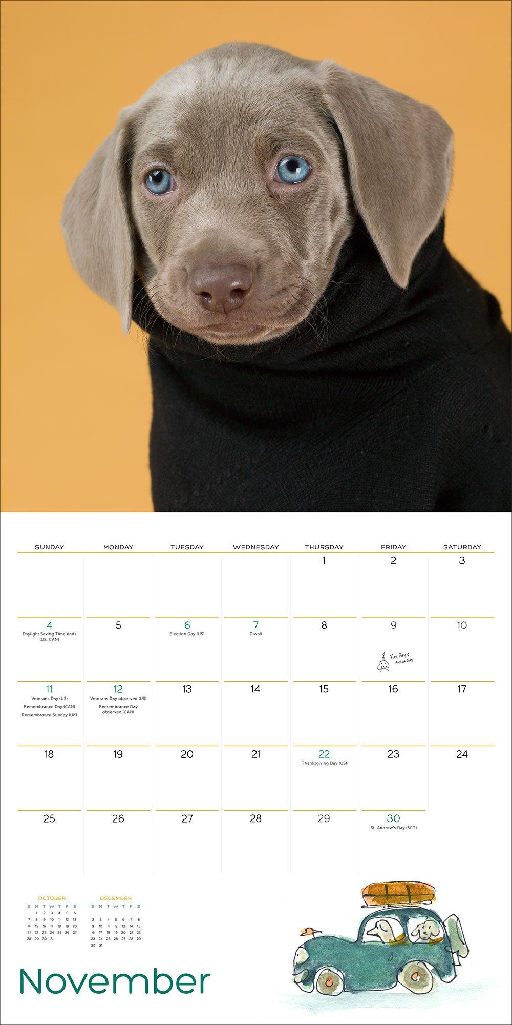 Amazon william wegman puppies 2018 wall calendar amazon william wegman puppies 2018 wall calendar 9781419724770 william wegman books nvjuhfo Image collections