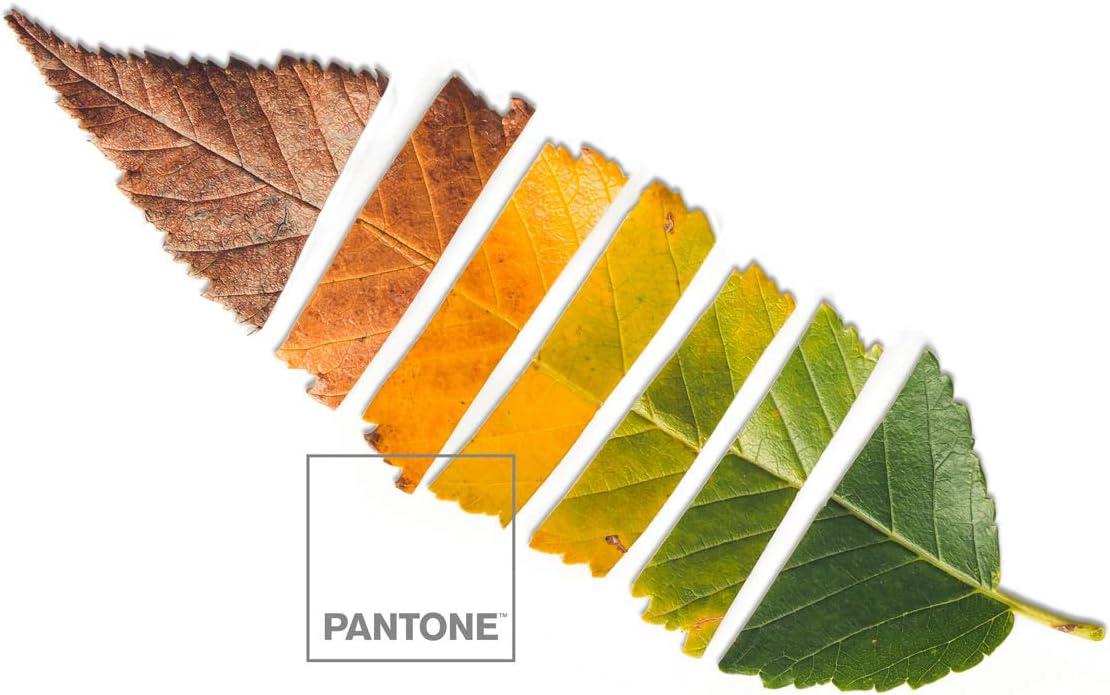 Pantone Colcha bouti Leaf 150 cm