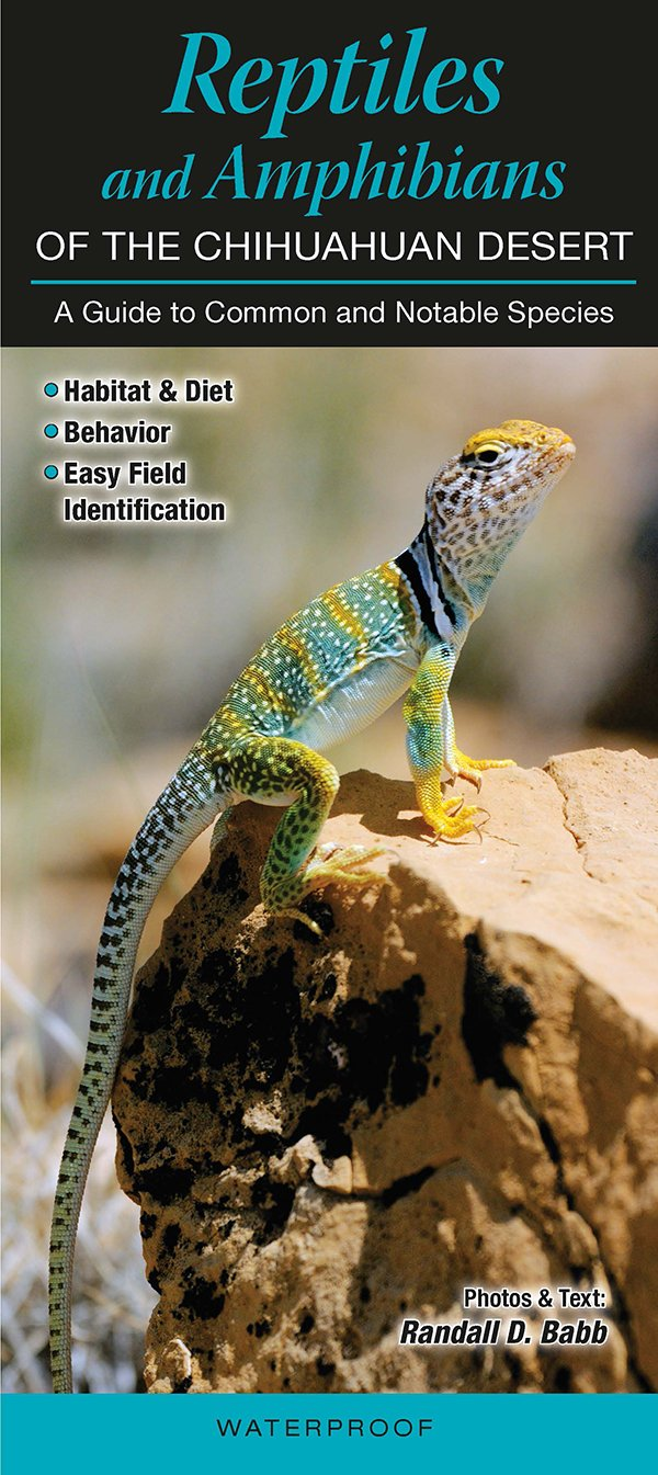 Reptiles & Amphibians of the Chihuahuan Desert