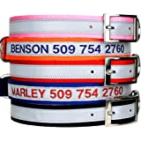 Embroidered Reflective Metal Buckle Dog Collar – Personalized Dog Collar with Pet Name and Phone Number. Safety Reflective Dog Collar.