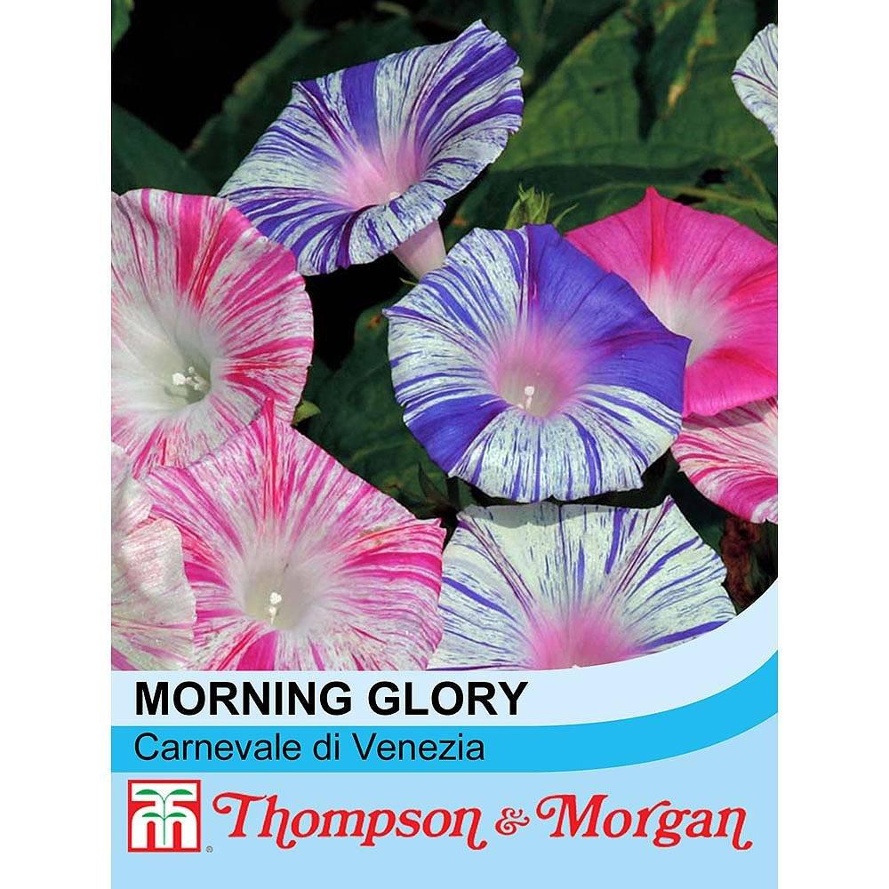 Johnsons UK//JO//FL Morning Glory Carnevale Di Venezia