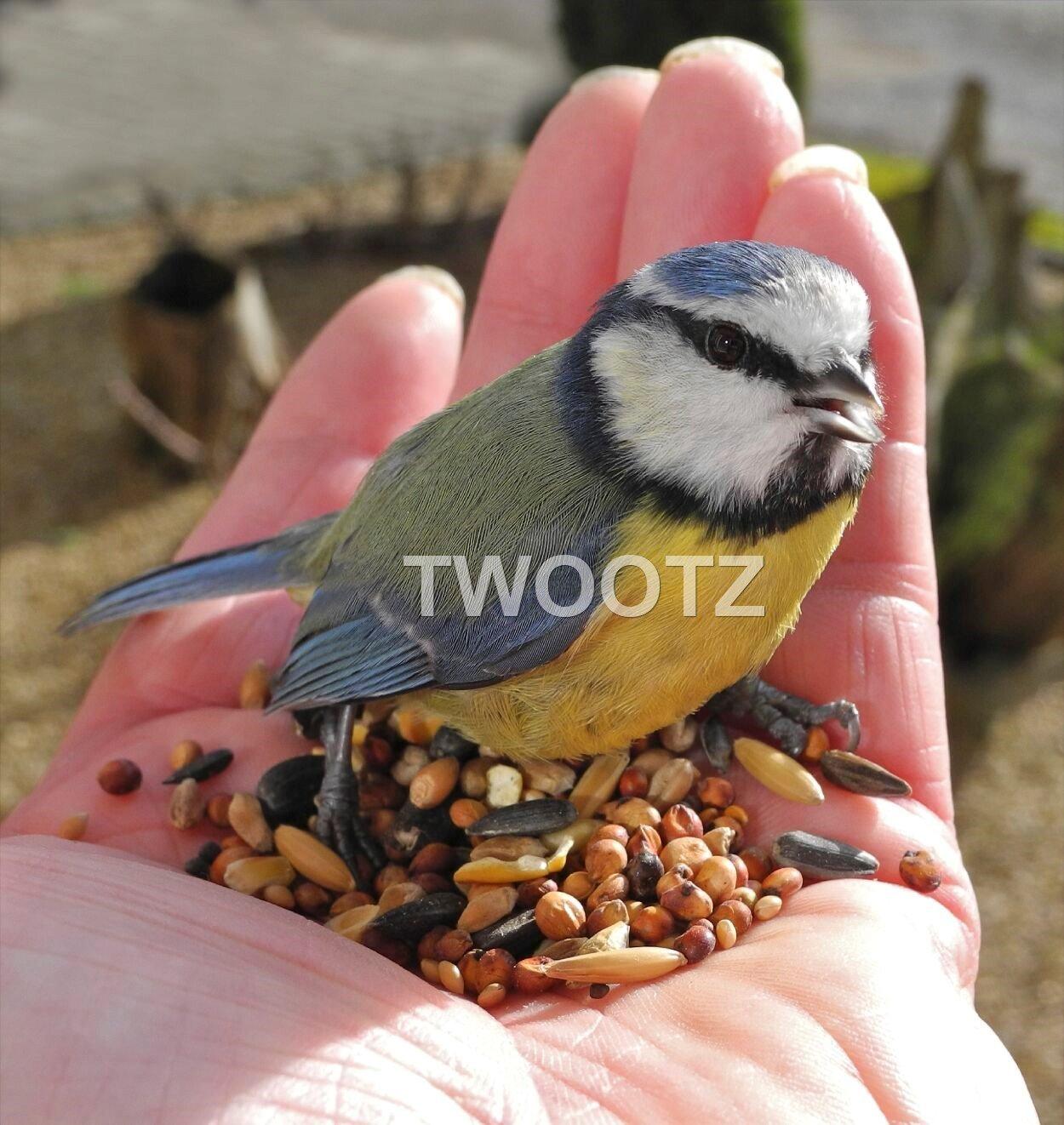 25 kg Dawn Chorus Original Flavour Wild Bird Seed Mix Twootz