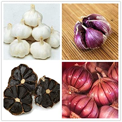Lioder Colorful Black Garlic Seeds Vegetable Plant Seeds Organic Heriloom Home Gardening Planting : Garden & Outdoor
