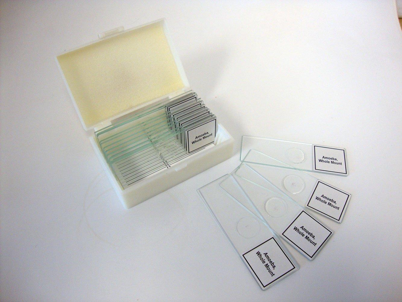 Prepared Slide, Amoeba proteus, Classpack of 15 Sides (Free USPS Shipping)
