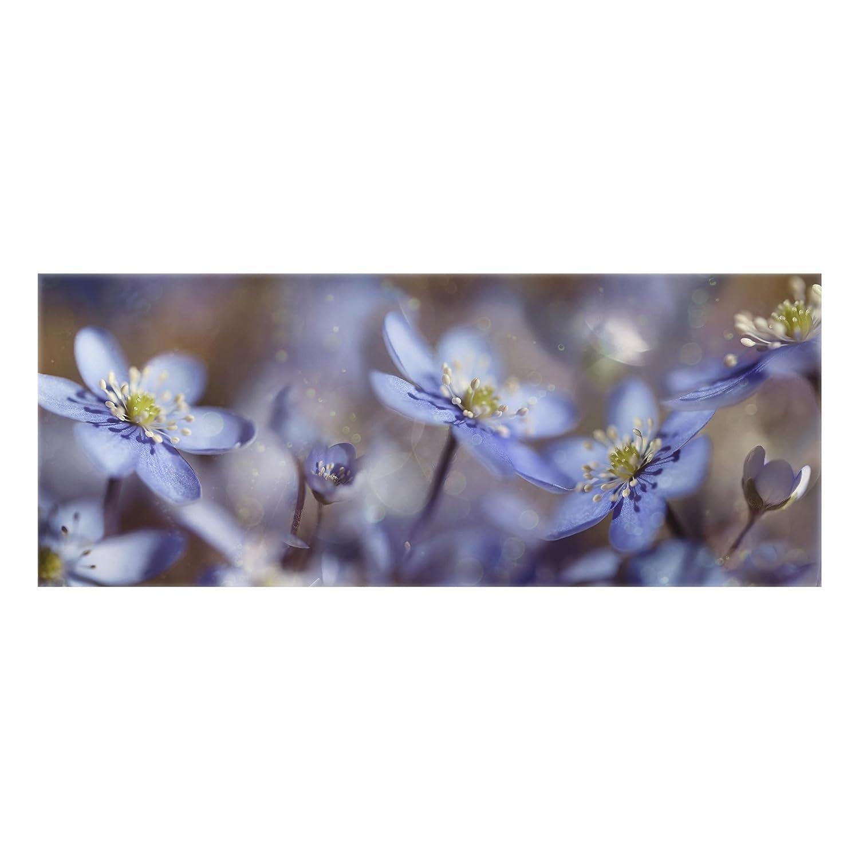 Bilderwelten Glass Splashback - Anemones In Blue - Panoramic, Backsplash Cooker Splashback Protector Panel Decorative Splashback Panel, Dimension HxW: 40cm x 100cm PPS. Imaging GmbH