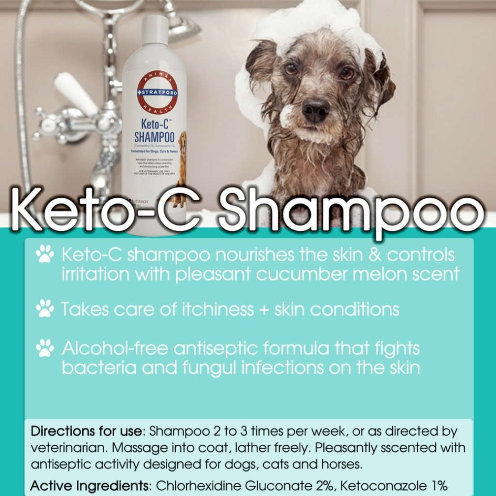 Stratford Pharmaceuticals KETO-C Medicated Shampoo - Chlorhexidine w/Ketoconazole and Aloe (Antibacterial & Anti-fungal) for Dogs, Cats, and Horses - A Pleasant Cumber Melon Scent! (1 Gallon) by Stratford Pharmaceuticals (Image #2)