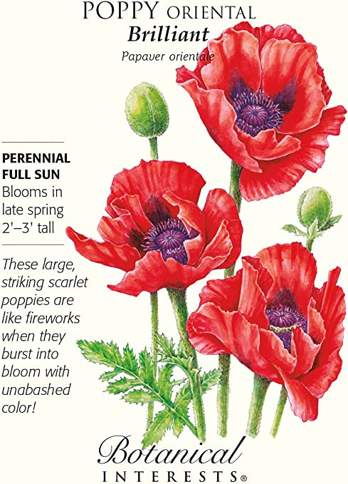 Amazon Com Brilliant Oriental Poppy Seeds 200 Mg Garden