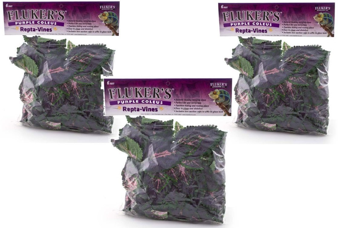 Fluker's Repta Vines-Purple Coleus (Pack of 3)
