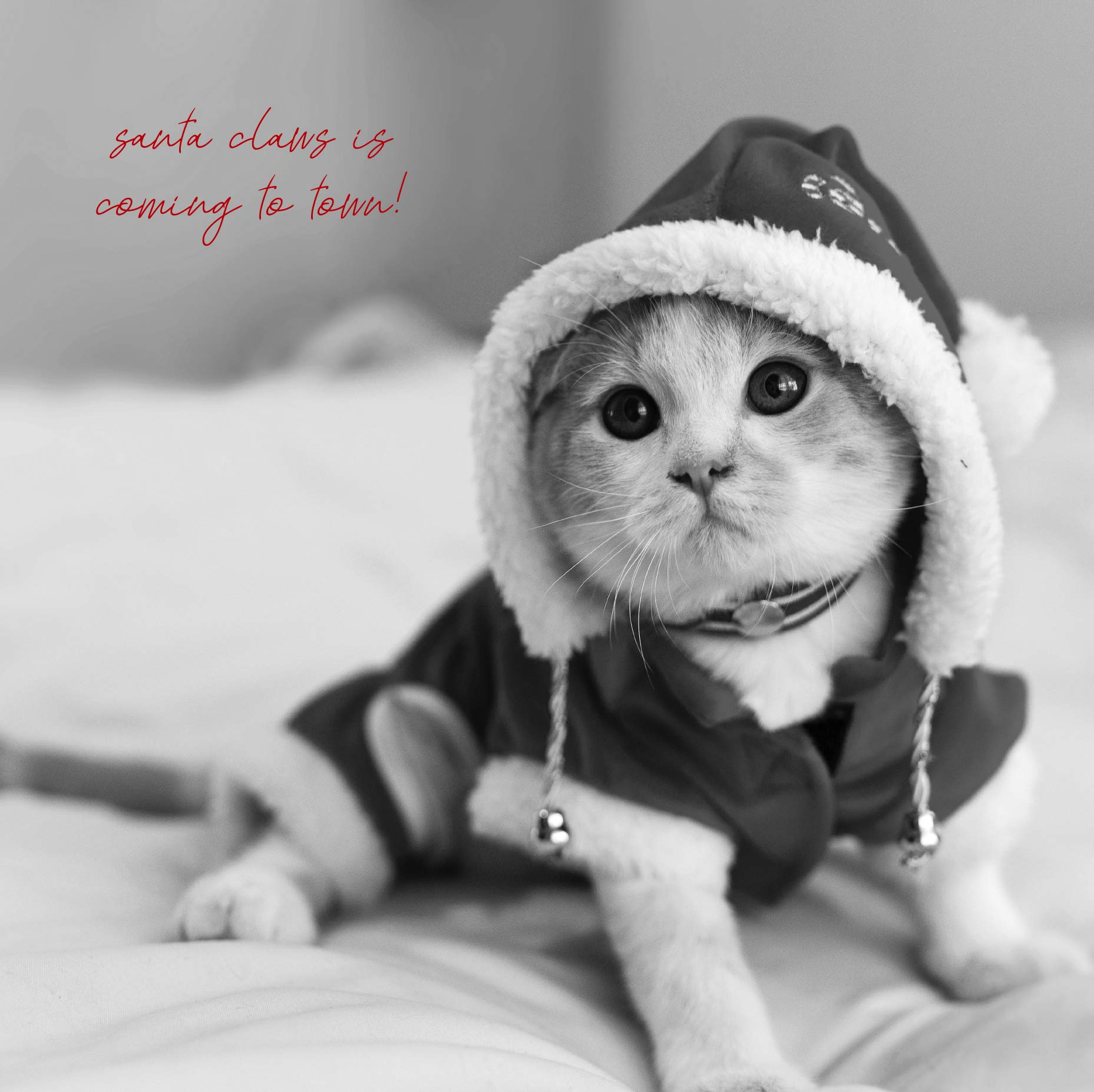 Emotional Rescue in Black & White, Santa Claws, Open, Christmas Card, 163x163mm
