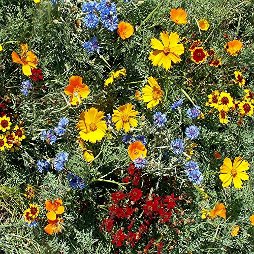 Outsidepride Gulf Coast Wildflower Seed Mix - 1 LB