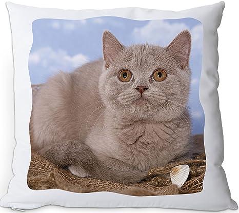 + + + Británico de Pelo Corto gato – Cojín/Cojín | Pillow/kussen