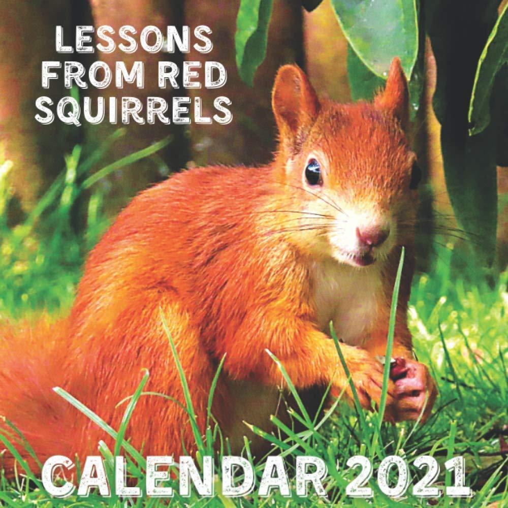 Squirrel Calendar 2021 Lessons From Red Squirrels Calendar 2021: November 2020   December