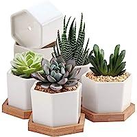 Succulent Pots,OAMCEG 2.75 inch Mini Succulent Plant Pots,Set of 6 White Ceramic Succulent Cactus Planter Pots with…