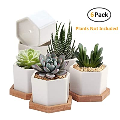 Succulent Plant Pots,OAMCEG 2.75 inch Mini Succulent Planter, Set of 6 White Ceramic Succulent Cactus Planter Pots with Bamboo Tray(Plants NOT Included): Garden & Outdoor