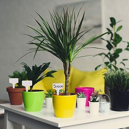 TRIXES 100 Etiquetas para Plantas en Forma de T - 6 x 10 cm - para ...